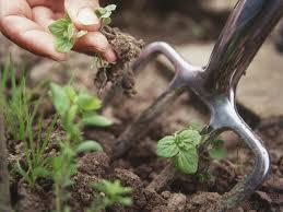 Désherbage jardin
